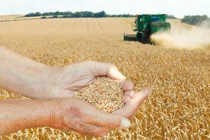 germen de trigo fermentado